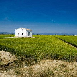 Champs de riz au delta de l'Èbre